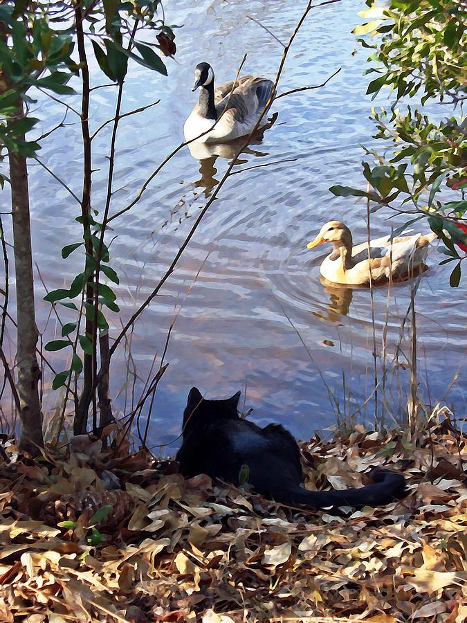 Geese Photograph - Cat Play by Joan Meyland