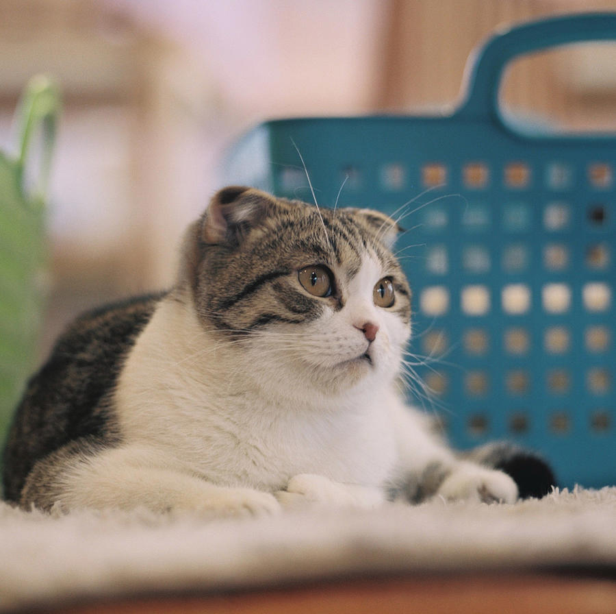 Horizontal Photograph - Cat Sitting On Floor by Jiyeon-Agnes, Lee loves Analog images by Films!