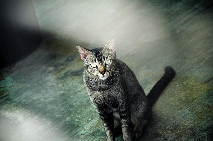 Horizontal Photograph - Cat Sitting On Floor by Rajs Photography