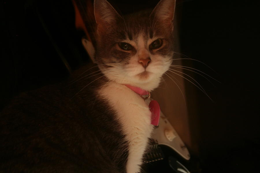Kitten Photograph - Cat The Majestic by Eduardo Bouzas