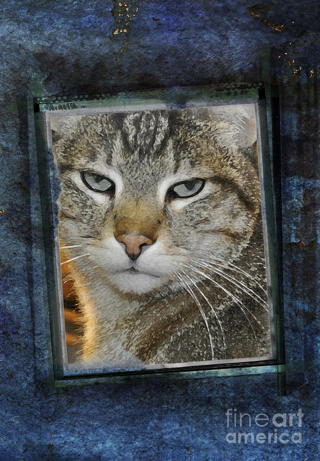 Cat Photograph - Cat Through A Tiny Window by Mary Machare