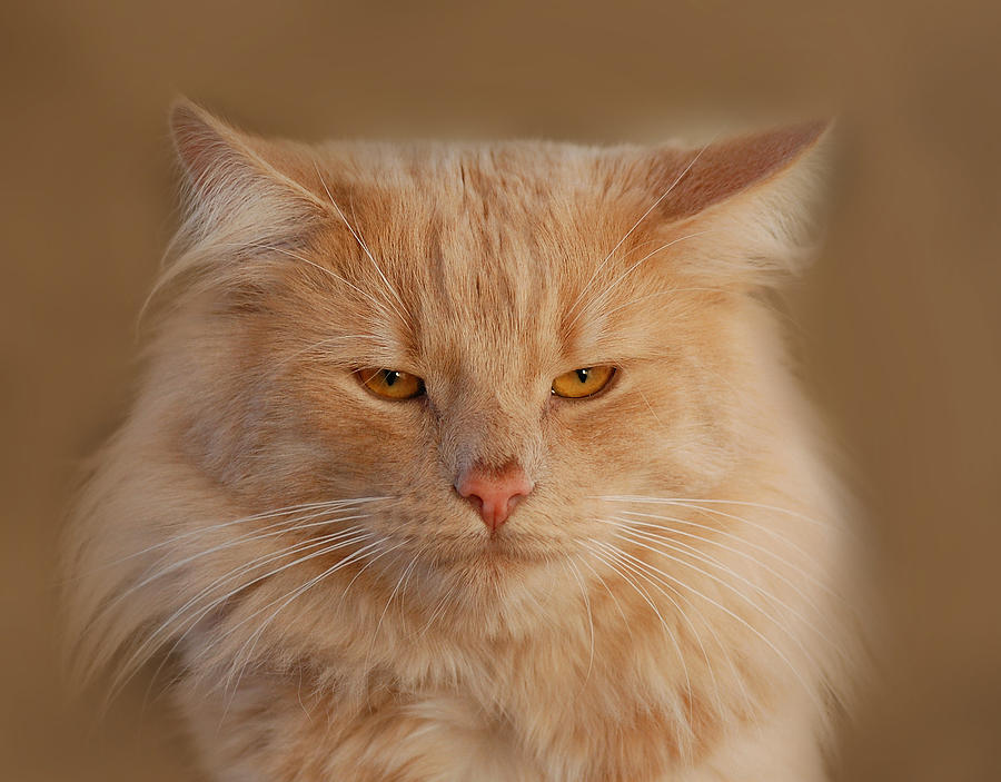 Cat Photograph - cat by Waldek Dabrowski