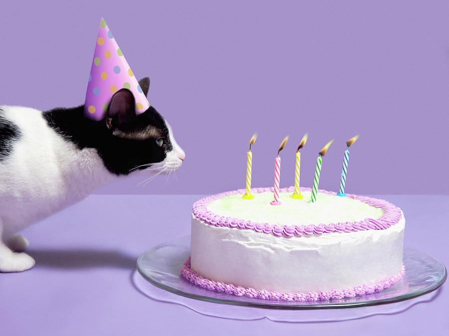 Horizontal Photograph Cat Wearing Birthday Hat Ing Out Candles On Cake By Steven Puetzer