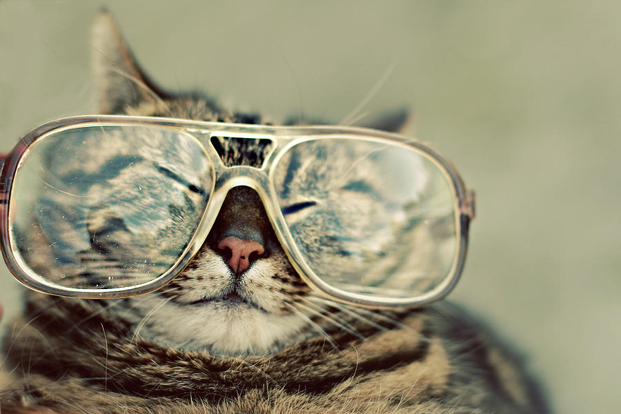 Horizontal Photograph - Cat With Glasses by Sara Miedema