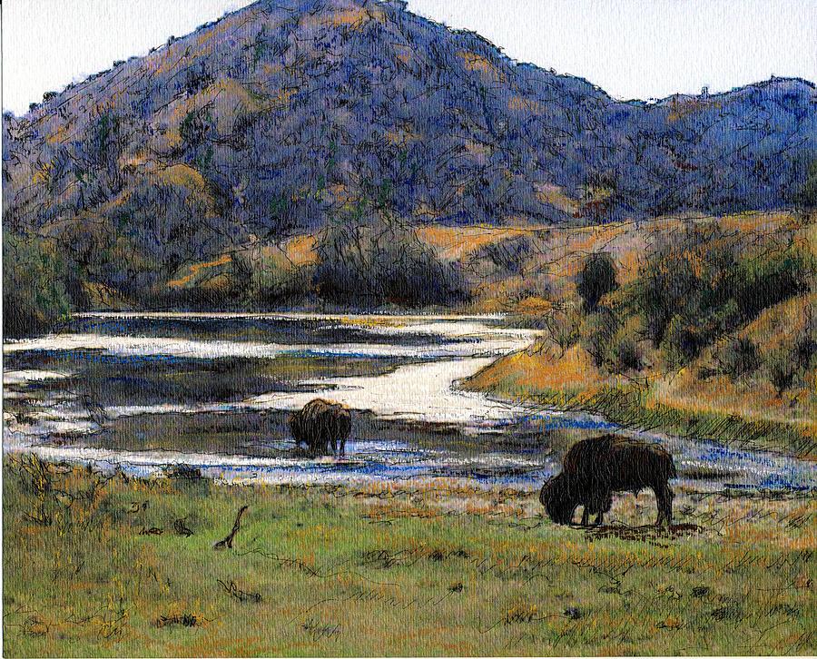 California Mixed Media - Catalina Buffalo  SOLD by Randy Sprout