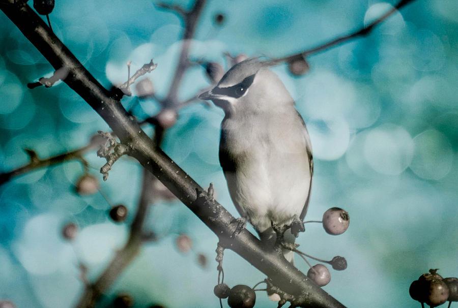 Bird Photograph - Catch The Bandit by Trish Tritz