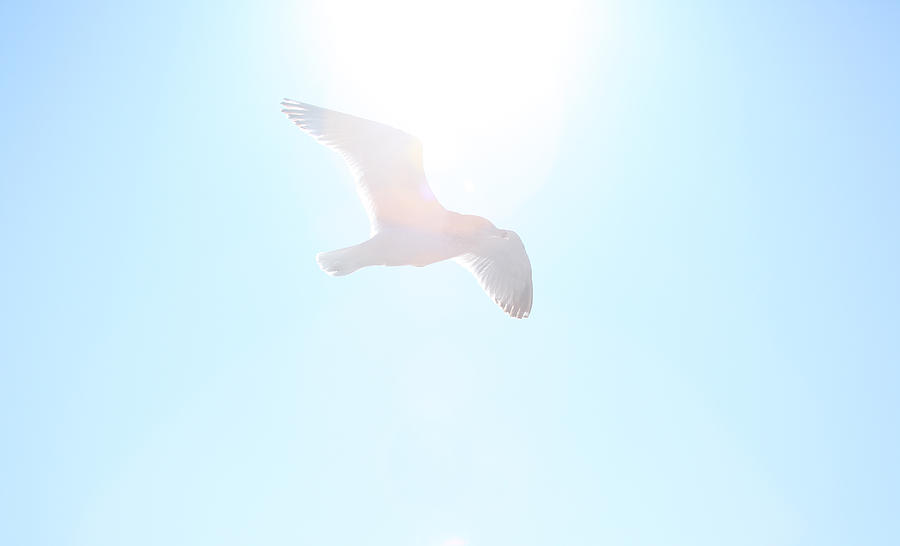 Seagull Photograph - Catch The Rays by Karol Livote