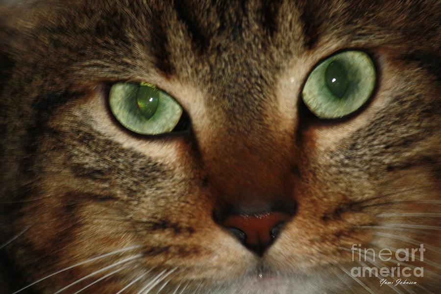 Cat Photograph - Cats Eye by Yumi Johnson