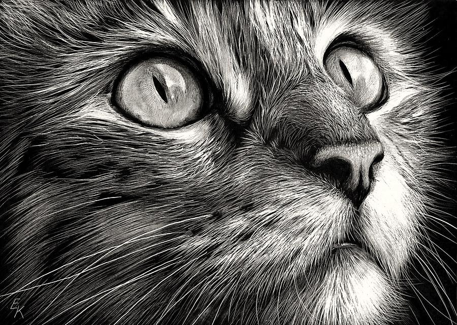Cat Drawing - Cats Face by Elena Kolotusha