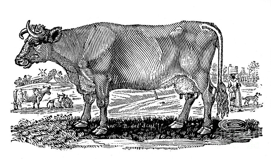 1790 Photograph - Cattle by Granger