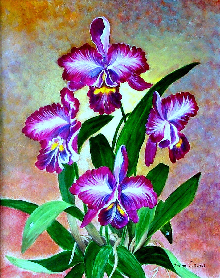 Cattleya Orchid Painting by Fram Cama