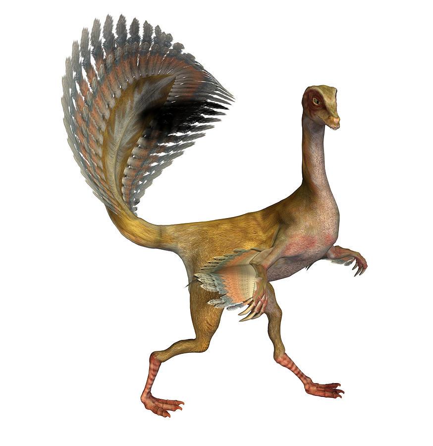 Dinosaur Photograph - Caudipteryx Dinosaur by Friedrich Saurer
