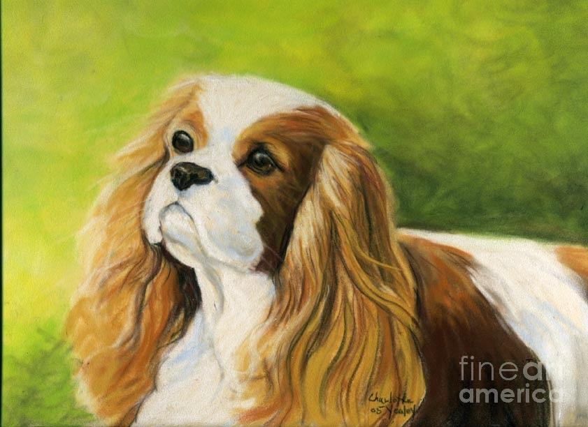 Dog Painting - Cavalier King Charles Spaniel  by Charlotte Yealey