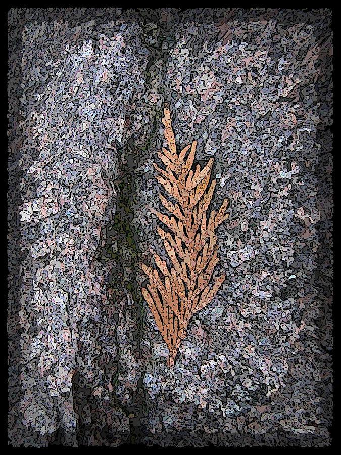 Cedar Digital Art - Cedar On Granite by Tim Allen