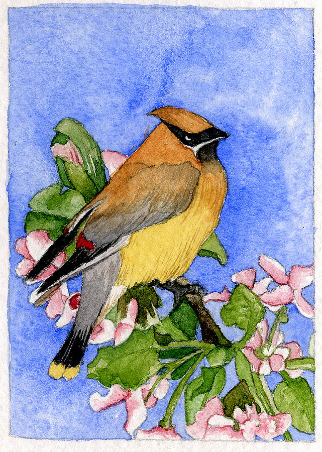 Bird Painting - Cedar Waxwing In Spring by Eunice Olson