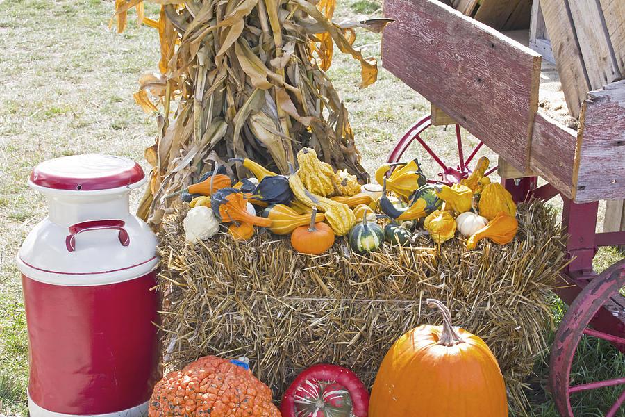 Fall Photograph - Celebrating Fall by Wayne Stabnaw