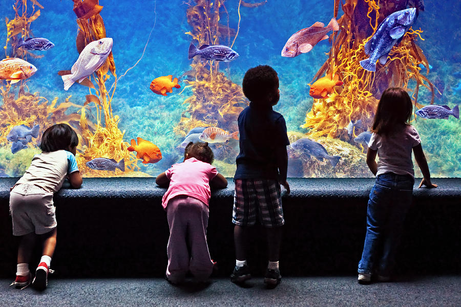 Landscape Photograph - Celebrating Life Under The Sea  by Donna Pagakis