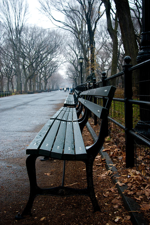 Central Park Bench Photograph By Heidi Reyher