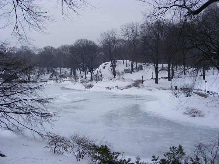 New York Photograph - Central Park In The Snow by Clare Staplehurst