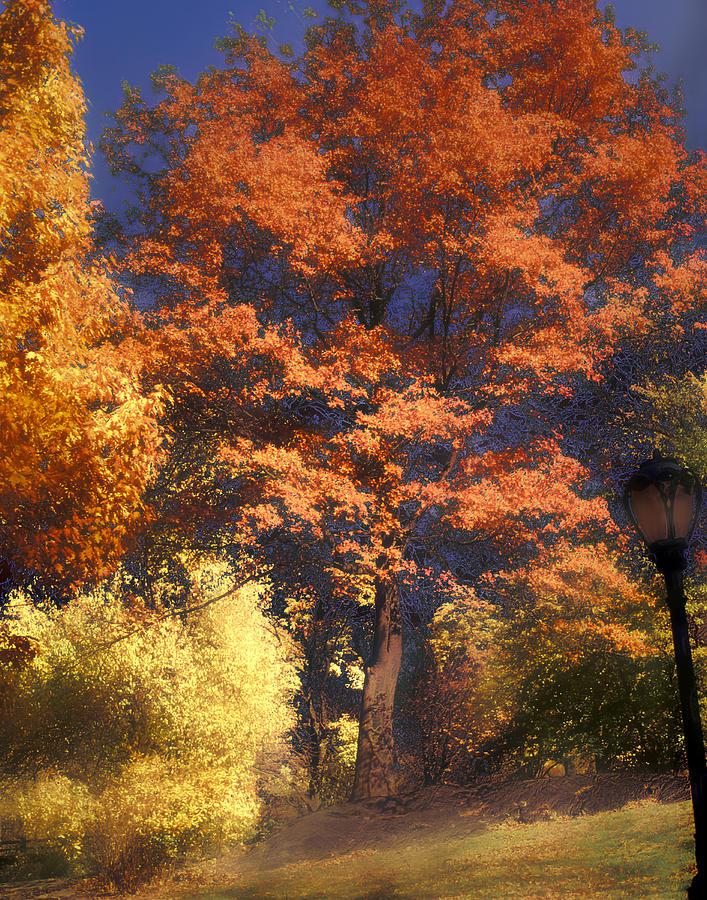 Autumn Photograph - Central Park by Jim Painter