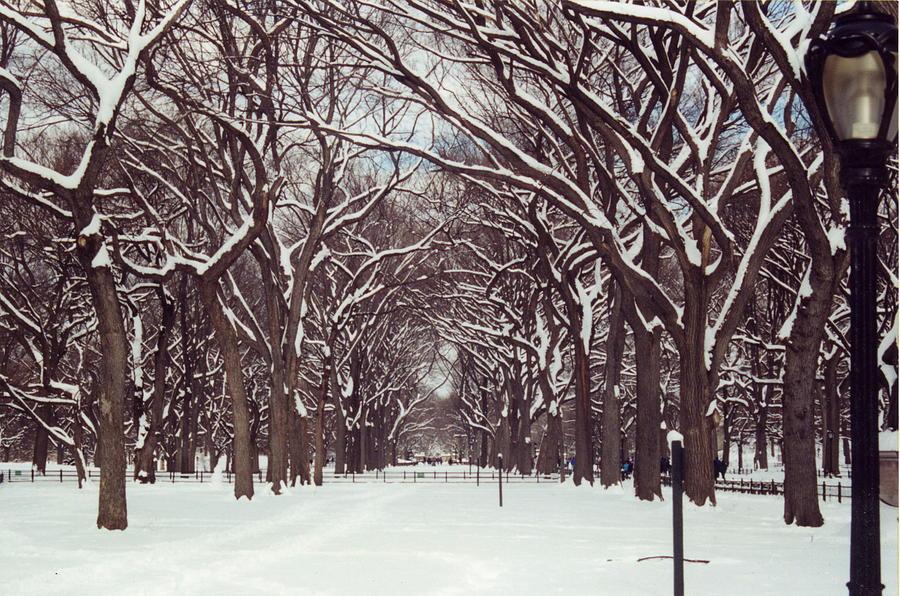 Central Park Winter Photograph By Andrea Lucas