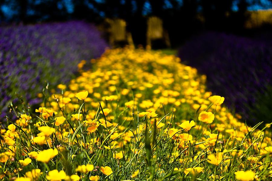Yellow Photograph - Chairs by Toni Johnson