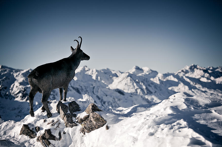 Horizontal Photograph - Chamois Watching Over Austria by RICOWde