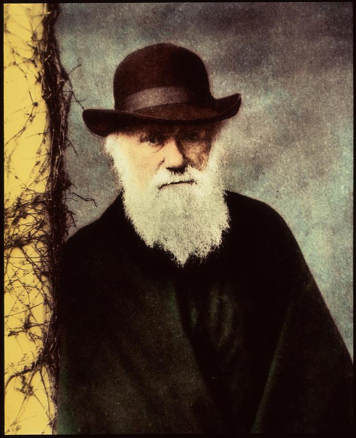 Darwin Photograph - Charles Darwin by