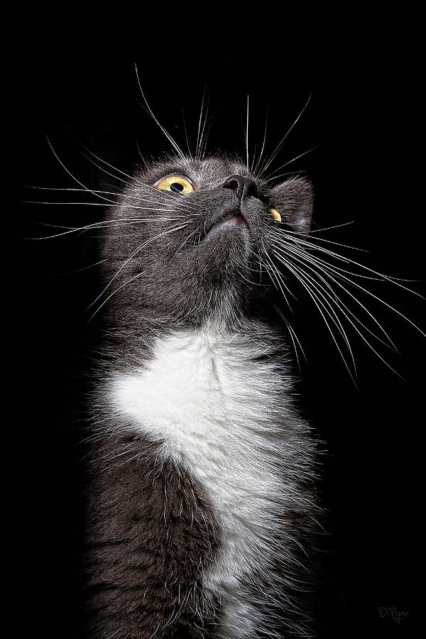 Cat Photograph - Charlie Boy by Derek Byrne