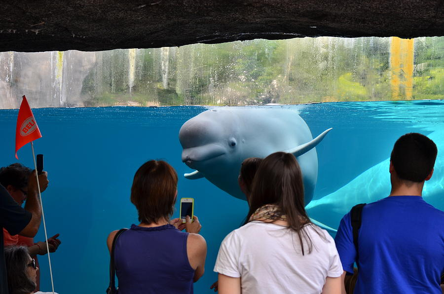 Checking Out Todays Crowd Photograph by William Hensler