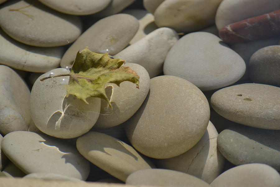 Pure Photograph - Chelsea Pebbles by Dickon Thompson
