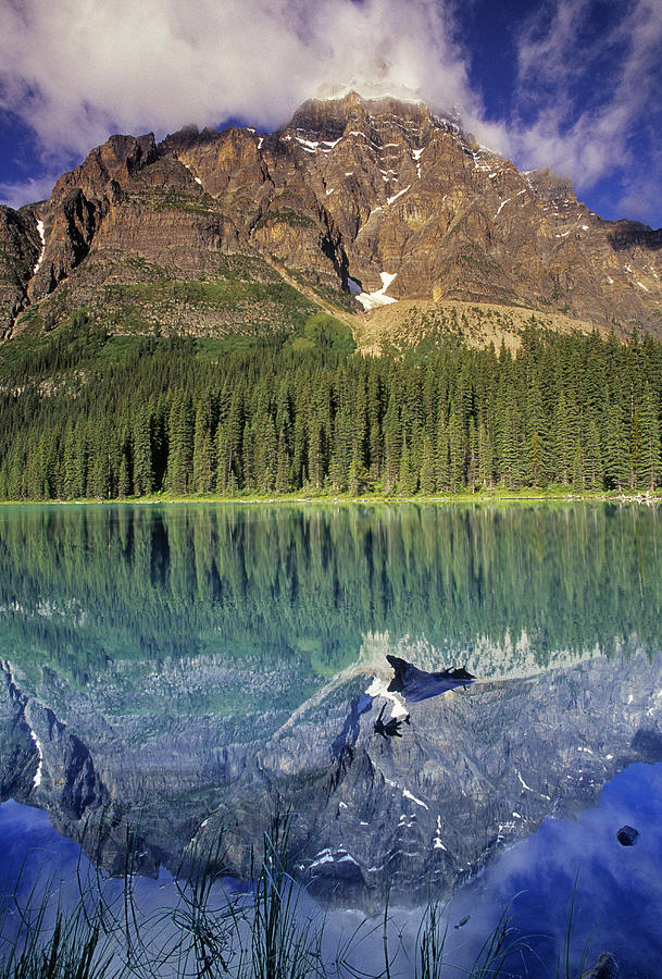 Light Photograph - Chephren Lake And Mt. Chephren, Banff by Darwin Wiggett