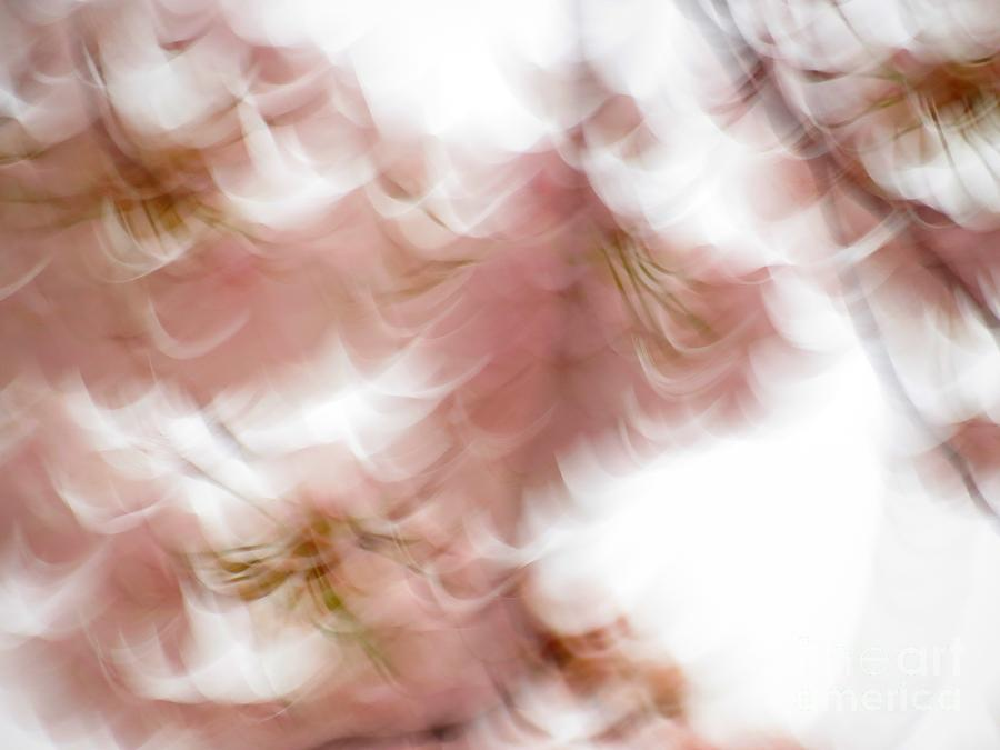 Abstract Photograph - Cherry abstract by Rrrose Pix