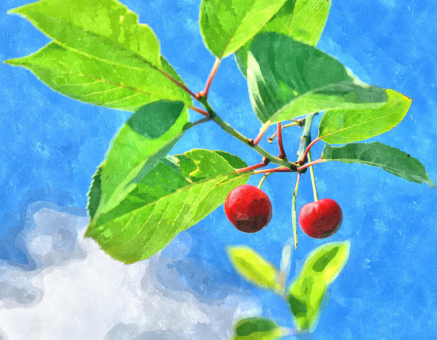 Cherry Photograph - Cherry Berries by Aleksandr Volkov