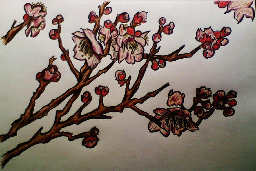 Cherry Blossoms Drawing - Cherry Blossoms by Cameron Bailey