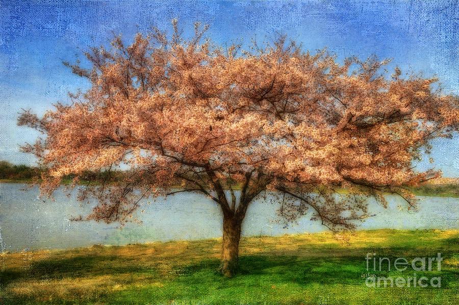 Cherry Tree Photograph - Cherry Tree by Lois Bryan