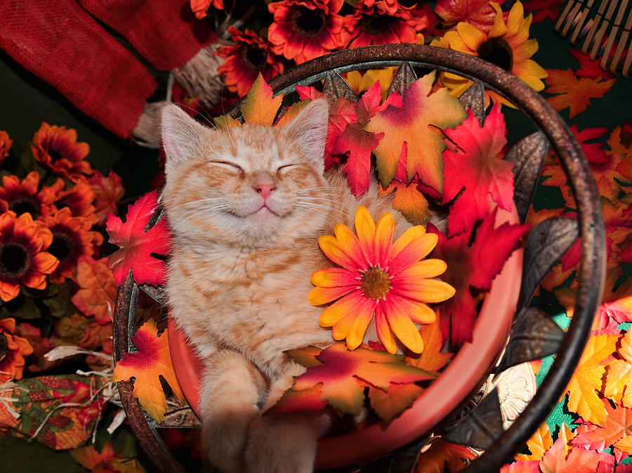 Cute Photograph - Cheshire Cat Dreaming Of Catching Mice by Chantal PhotoPix