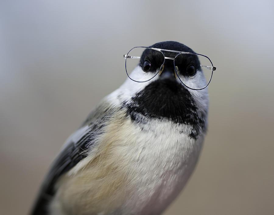 Horizontal Photograph - Chickadee Wearing Glasses by Www.sharp-photo.com
