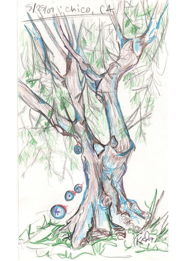 Tree Drawing - Chico Ca River Tree by Carol Rashawnna Williams