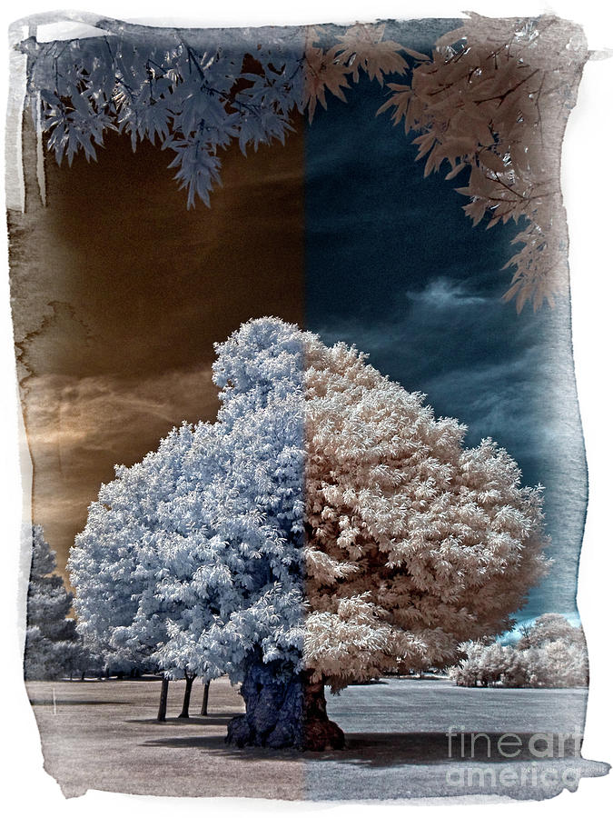 Oak Tree Photograph - Childhood Oak Tree - Infrared Photography by Steven Cragg