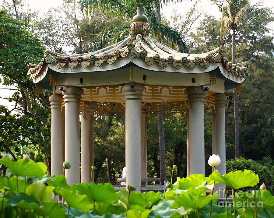 Chinese Pavilion In A Lotus Flower Garden Photograph By Yali Shi