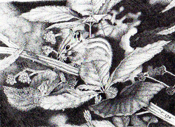 Leaves Drawing - Chipmunk by Inger Hutton