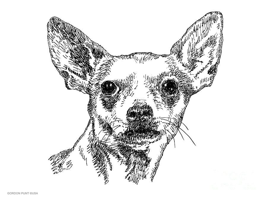 chiwawa drawing chiwawa portrait drawing by gordon punt