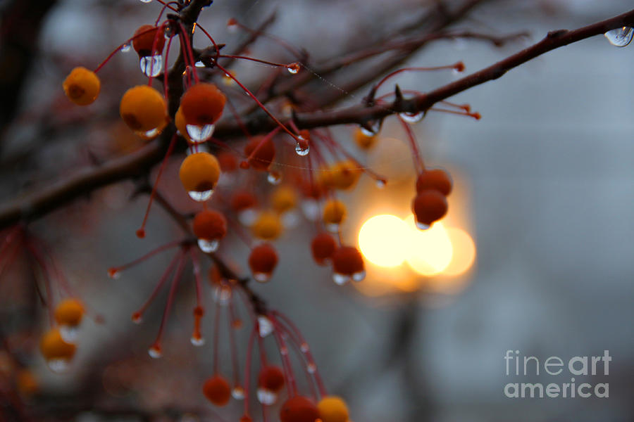 Christmas Photograph - Christmas Berries by Michael Mooney