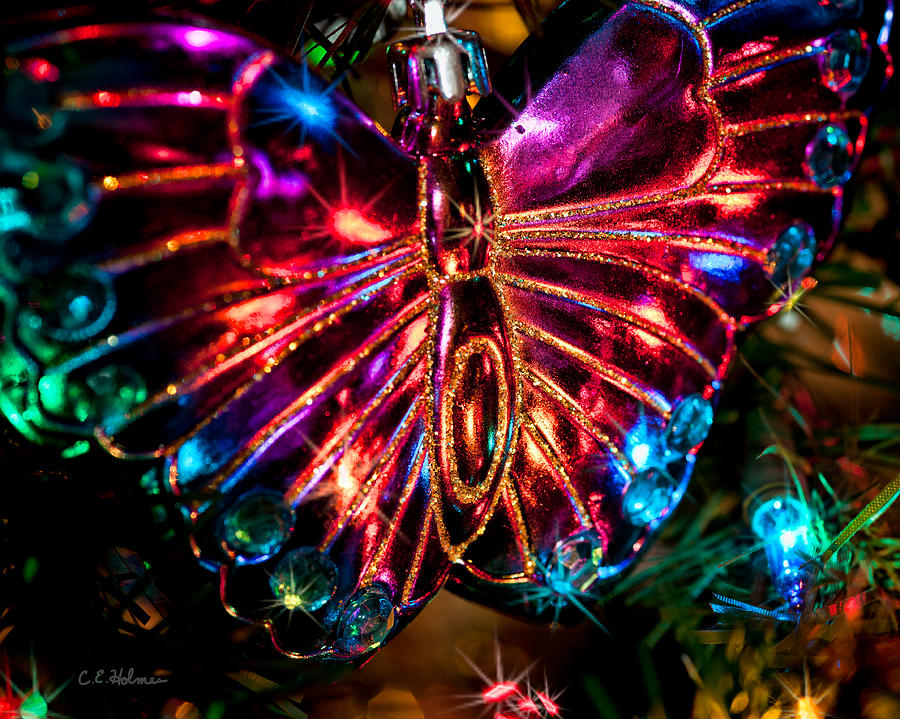 Christmas Butterfly Photograph by Christopher Holmes