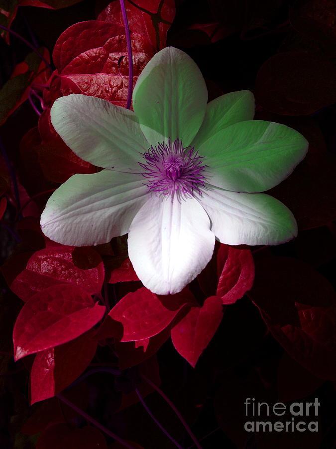 White Flower Photograph - Christmas Cheer by Joyce Hutchinson