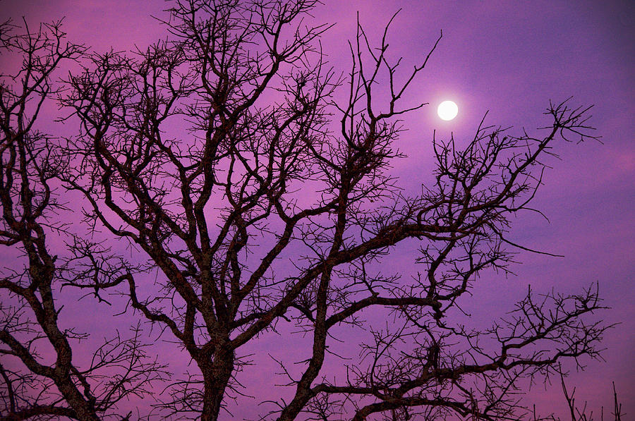 Horizontal Photograph - Christmas Morning Moon by Jeff R Clow