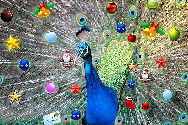 Christmas Peacock Digital Art by Ronel Broderick