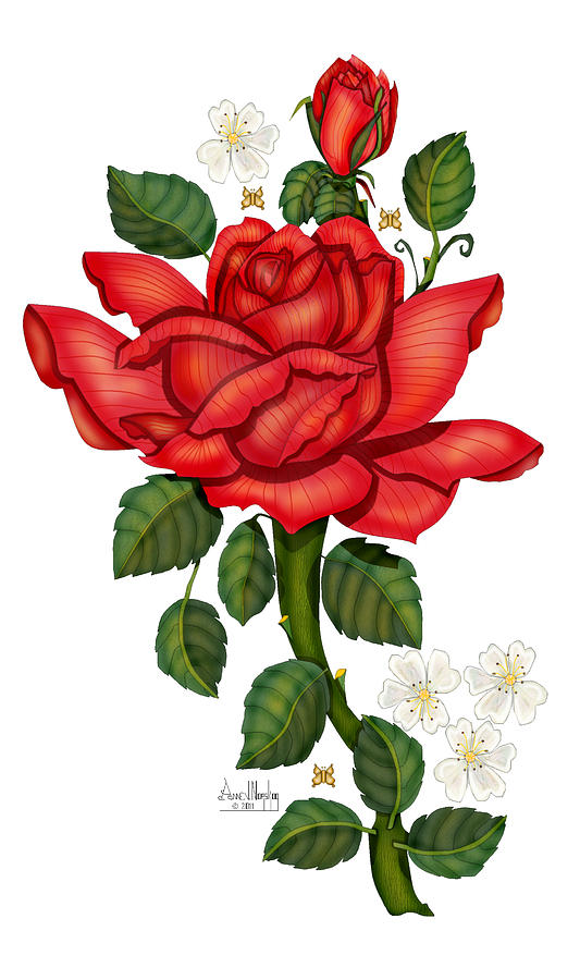 Hand-drawn Digital Art; Hand-drawn Digital Rose; Digital Rose; Anne Norskog Rose; Red Rose; Red Rose On White Background Painting - Christmas Rose 2011 by Anne Norskog