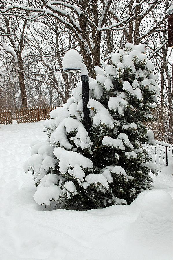 Christmas Photograph - Christmas Tree by Aimee L Maher Photography and Art Visit ALMGallerydotcom